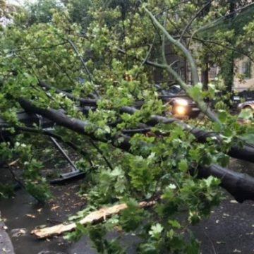 Погодный коллапс в Одессе: затопленные дороги, упавшие деревья и тысячи людей без света