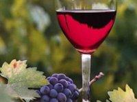 «Баядера Групп» вывела на польский рынок вина ТМ Koblevo