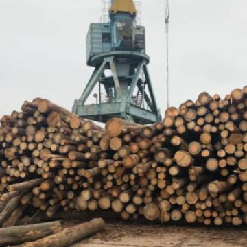 Ёлки-палки: Кто крышует контрабанду леса в Придунавье
