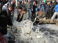 В Запорожье в рамках акции «Спасем Днепр вместе!» установлено 1200 нерестовых площадок для рыб