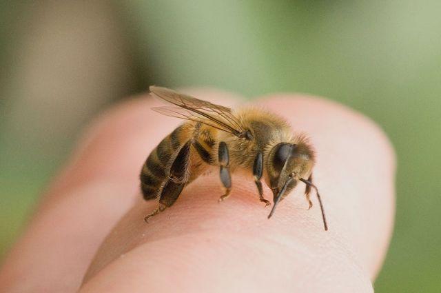 В Никополе мужчину пчелы зажалили до смерти