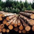 Гончарук поручил полноценно запустить централизованный учет древесины в Украине до 1 февраля 2020г