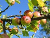 T.B.Fruit в 2019г заняла 10% мирового рынка сока, с запуском в августе завода в Польше может выйти на 12-14%