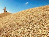 Украина на 22 февраля экспортировала 31 млн тонн зерновых и зернобобовых культур