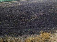 Минагрополитики пролоббирует повышение господдержки агросектора до 1% ВВП – министр Лещенко