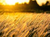 Кировоградская область собрала первый миллион тонн зерновых