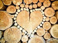 Принятие законопроекта о рынке древесины будет способствовать восстановлению лесов и прозрачности на рынках как в Украине, так и в ЕС — Стефанишина