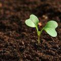 Кабмин утвердил порядок предоставления господдержки фермерам, использующим орошение земель